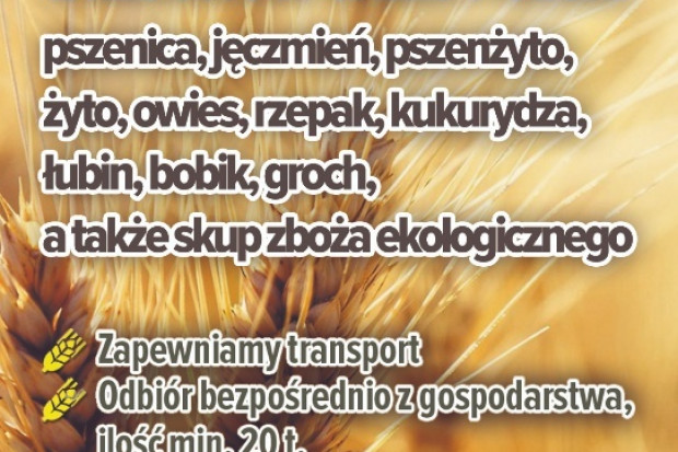 Ogłoszenie rolnicze: skup jęczmienia- kupię jęczmień