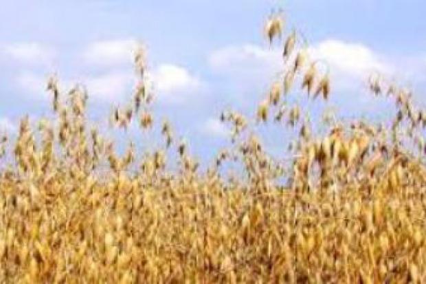 Ogłoszenie rolnicze: Skup owsa