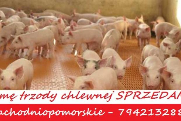Ogłoszenie rolnicze: Fermę trzody chlewnej sprzedam