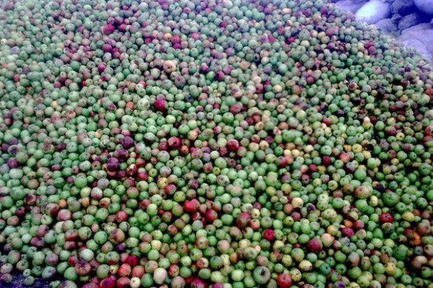 Ogłoszenie rolnicze: Ukraina. Produkujemy naturalny sok, ocet, polprodukty. Skupujemy jablka