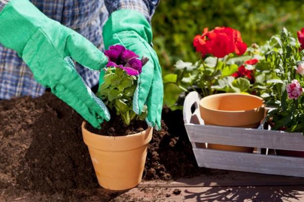 Ogłoszenie rolnicze: Wiosenne porządki w Twoim ogrodzie Zapraszamy!