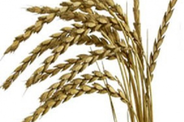 Ogłoszenie rolnicze: Pszenica konsumpcyjna na eksport
