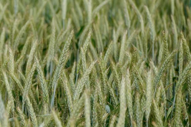 Ogłoszenie rolnicze: Sprzedam grunty rolne, 214 ha, Wielkopolska