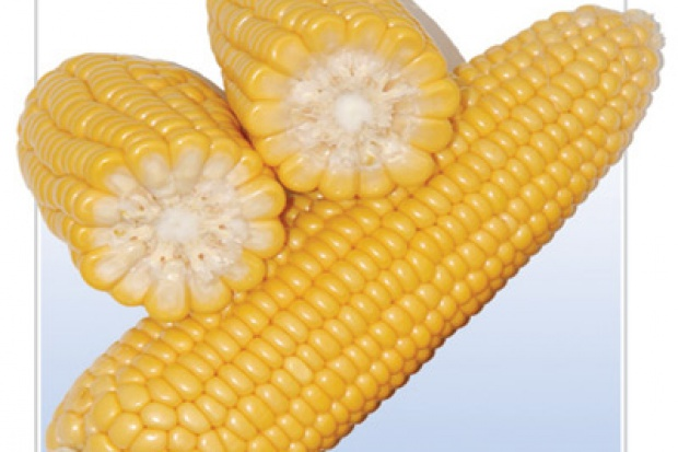 Ogłoszenie rolnicze: Sprzedam kukurydze