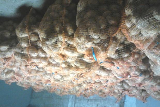 Ogłoszenie rolnicze: Ziemniaki, cebula,marchew,buraki, marchew paszowa