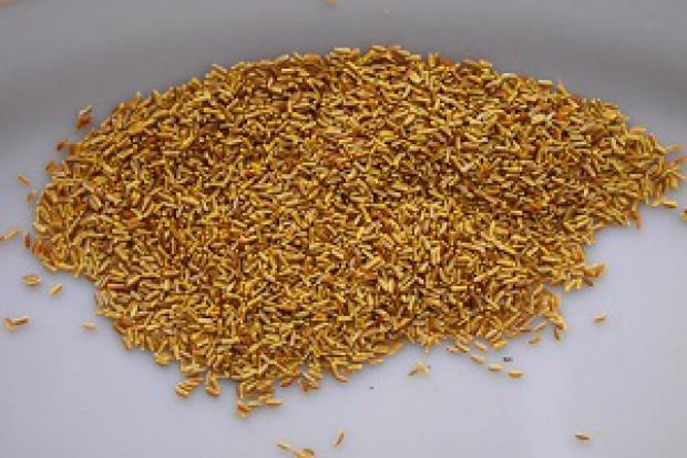 Ogłoszenie rolnicze: Rumianek pospolity nasiona,nasienie rumianku chamomile seeds