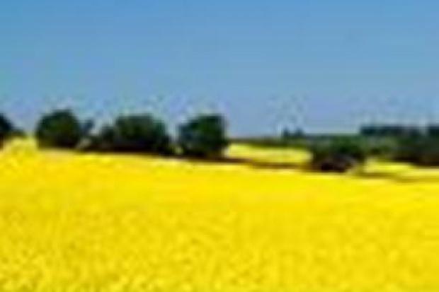 Ogłoszenie rolnicze: kupię rzepak