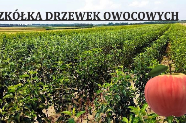 Ogłoszenie rolnicze: DRZEWKA OWOCOWE