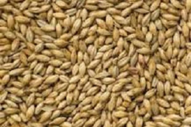 Ogłoszenie rolnicze: Kupimy do 400 ton żyta paszowego 530 zł/t