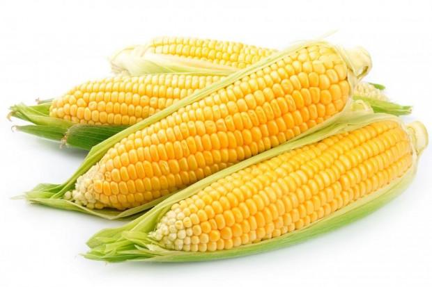 Ogłoszenie rolnicze: Sucha kukurydza