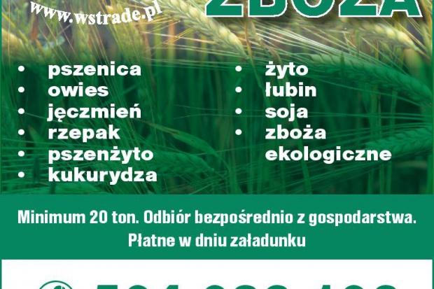 Ogłoszenie rolnicze: kupię łubin również ekologiczny