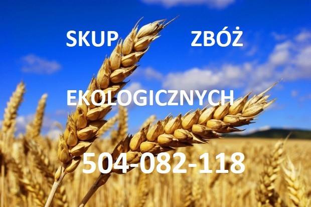 Ogłoszenie rolnicze: Kupię zboża ekologiczne