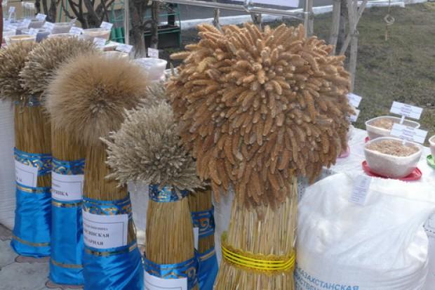Ogłoszenie rolnicze:  Ukraina. Pasza granulowana w workach, premiksy zbilansowane 300 zl/tona