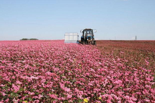 Ogłoszenie rolnicze: Ukraina.Grunty rolne,posiadlosci z sadem,ogrodem 0,30ha w cenie 3 tys. zl.