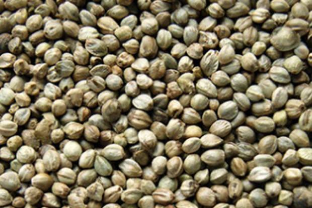 Ogłoszenie rolnicze: nasiona oleiste