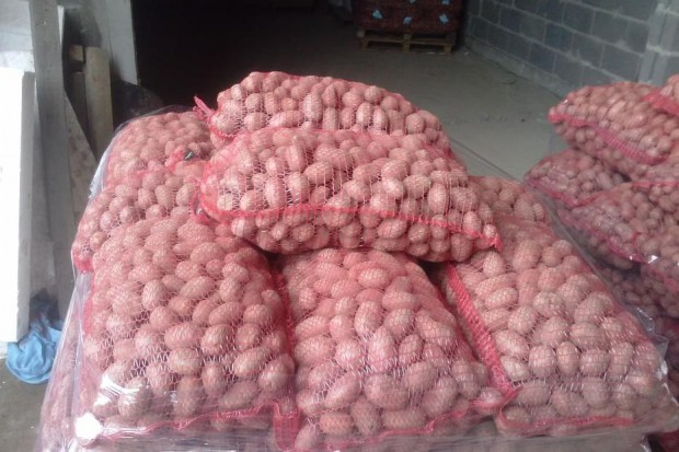 Ogłoszenie rolnicze: Ziemniak RED LADY - worek 15kg. Ilości tirowe