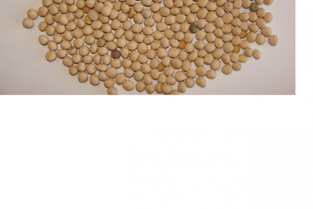Ogłoszenie rolnicze: Groch, nasiona rzepaku, kolendra, ciecierzyca