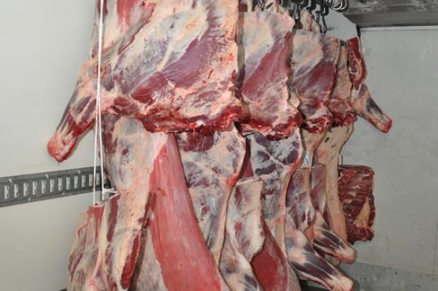 Ogłoszenie rolnicze: poszukujemy wiekszych zagranicznych odbiorców półtuszy ćwierci wołowych