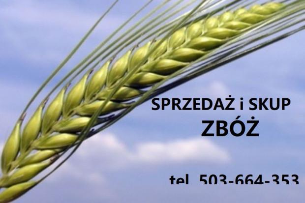 Ogłoszenie rolnicze: Sprzedam proso