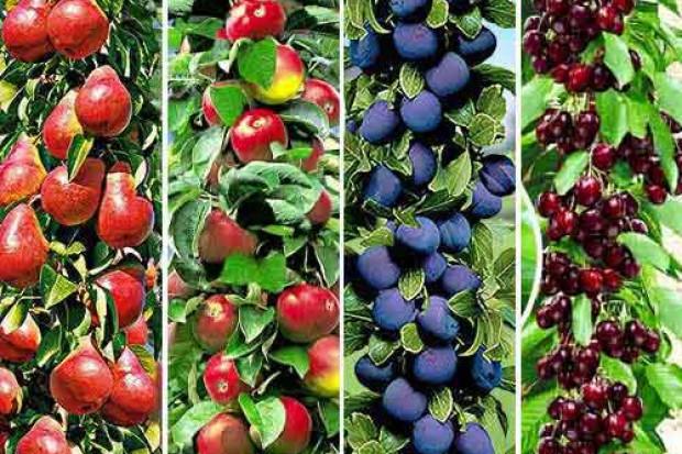 Ogłoszenie rolnicze: Drzewka i krzewy owocowe z certyfikatem!