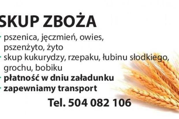 Ogłoszenie rolnicze: kupię łubin- skup łubinu