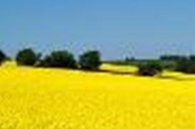 Ogłoszenie rolnicze: Kupie rzepak