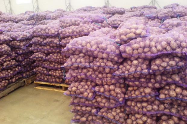 Ogłoszenie rolnicze: Ziemniaki 0,25 zl/kg,kapusta 0,40 zl/kg biala,czerwona,kwaszona.Grunty rolne