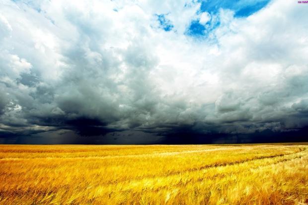 Ogłoszenie rolnicze: kupię żyto