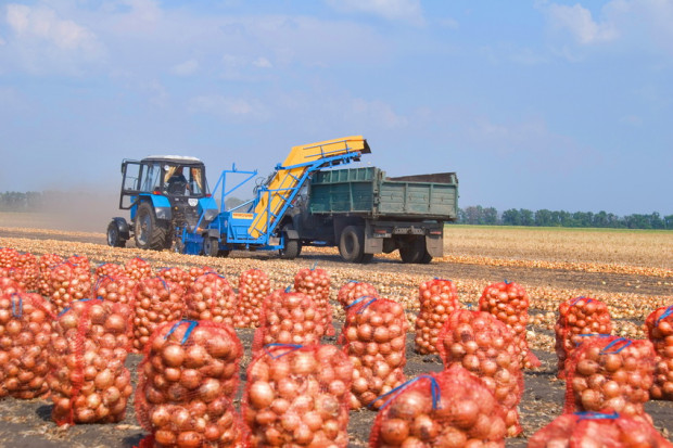 Ogłoszenie rolnicze: Ziemniaki 0,3 zl/kg, siano 70 zl/tona. Gospodarstwo zamienie na sprzet