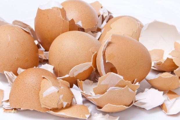 Ogłoszenie rolnicze: Mączka ze skorupek jaj kurzych – kupię