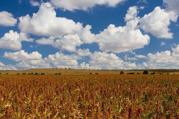 Ogłoszenie rolnicze: Len mielony, ekstrahowany olej, siemie 1 zl/kg