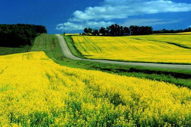 Ogłoszenie rolnicze: Siano lakowe na cele energetyczne / paszowe