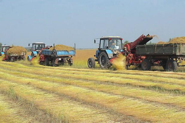 Ogłoszenie rolnicze: Ukraina. Siano lakowe 70 zl/tona, orzechy wloskie luskane, pestki dyni