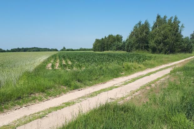 Ogłoszenie rolnicze: Działka rolna