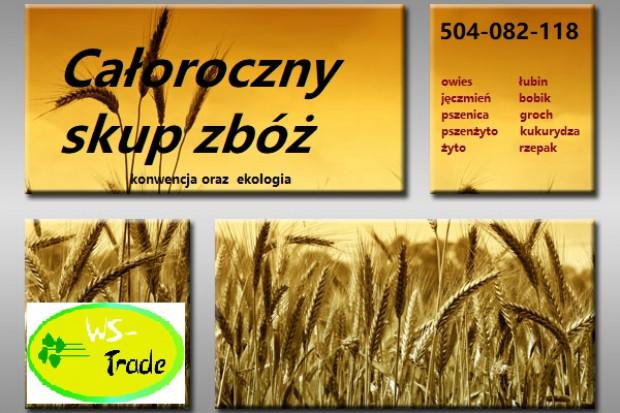 Ogłoszenie rolnicze: Kupię zboża ekologiczne i konwencjonalne