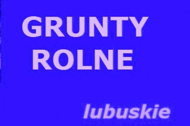 Ogłoszenie rolnicze: 200 ha poszukuję do dzierżawy Lubuskie
