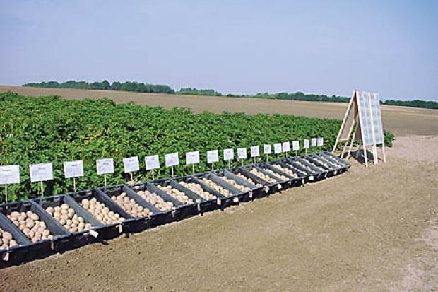 Ogłoszenie rolnicze:  Ukraina. Czarnoziemy I klasa, ziemia rolna pod uprawe w dobrych lokalizacjach