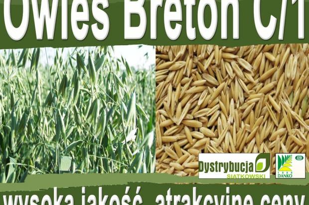 Ogłoszenie rolnicze: Kwalifikowane nasiona siewne owies Breton C/1