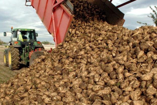 Ogłoszenie rolnicze:  Ukraina. Wyslodki buraczane 18 zl/tona. Melasa cukrowa, pasza energetyczna