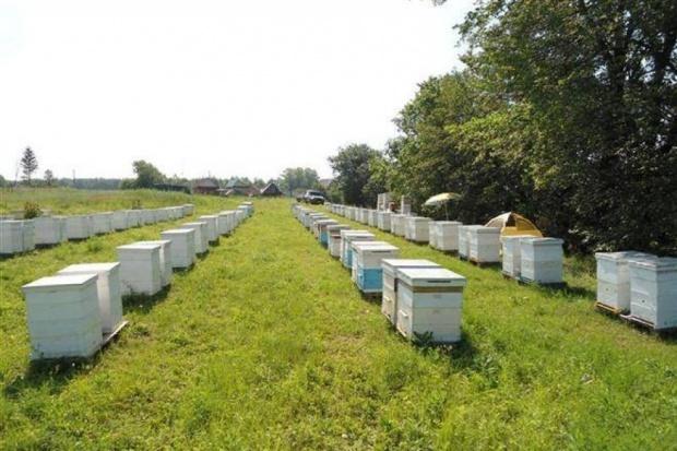 Ogłoszenie rolnicze: Ukraina.Miod 6 zl/kg.Gospodarstwa pszczelarskie,pasieczne.Wosk,propolis
