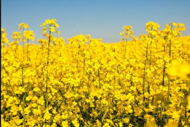 Ogłoszenie rolnicze: Oleje paszowe oraz spożywcze