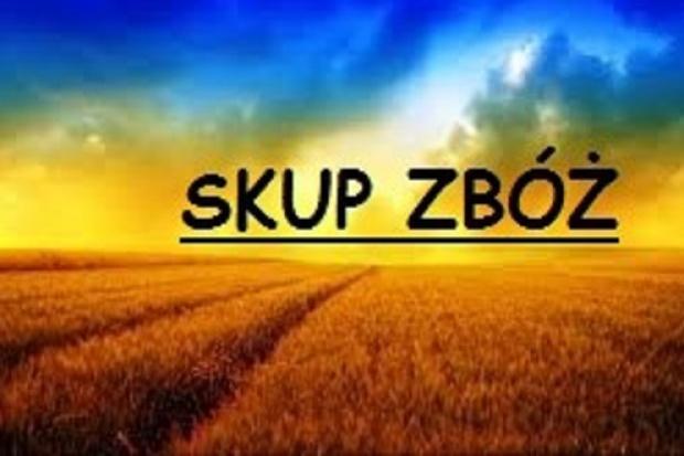 Ogłoszenie rolnicze: SKUP Pszenżyta