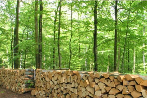 Ogłoszenie rolnicze: Wspolpraca.Drewno 15 zl/m3.Produkcja europalet,desek,biomasy,pelletu